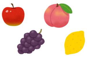 果物の絵カード